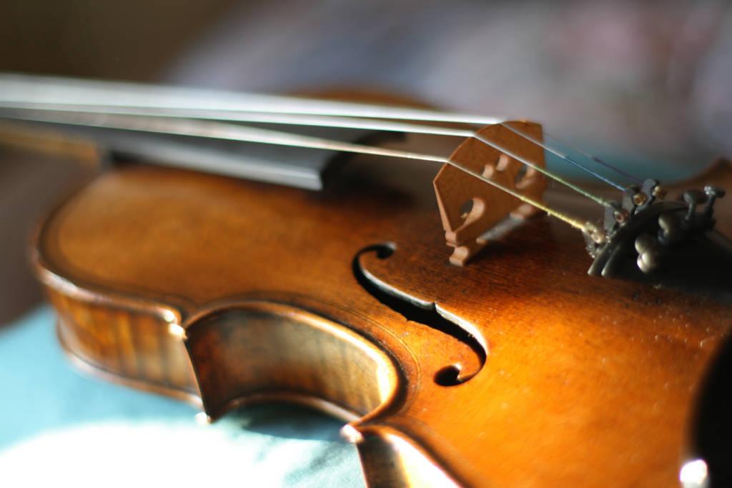 Viola close up Tampa Miami Music Lessons
